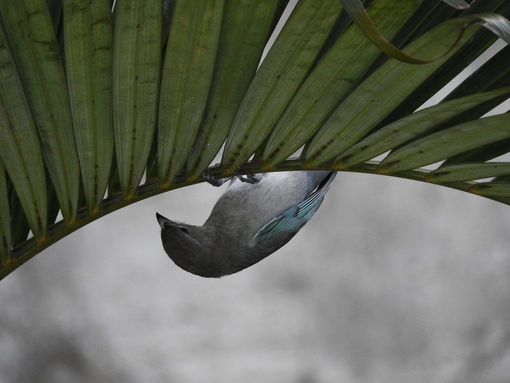 birdie, tightrope walker, bird upside down